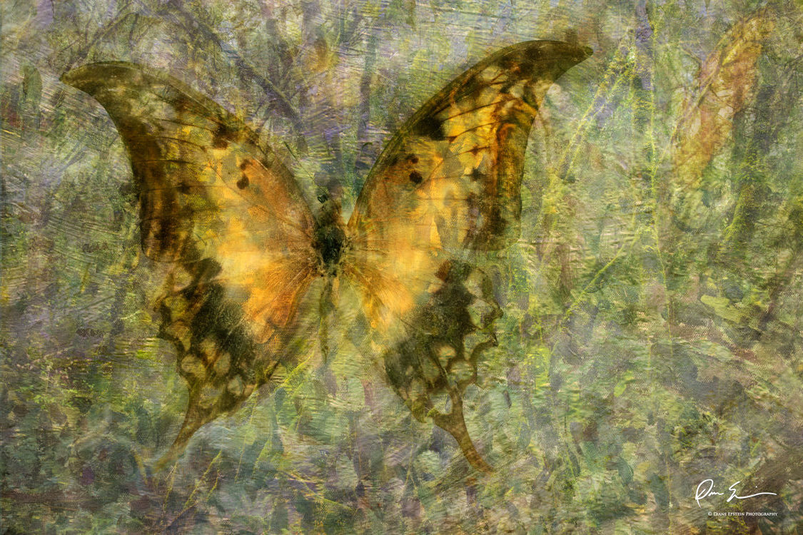Butterflies, Birds & Natural Landscapes